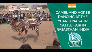getlinkyoutube.com-Camel and Horse Dancing at The Yearly Nagaur Cattle Fair in Rajasthan, India