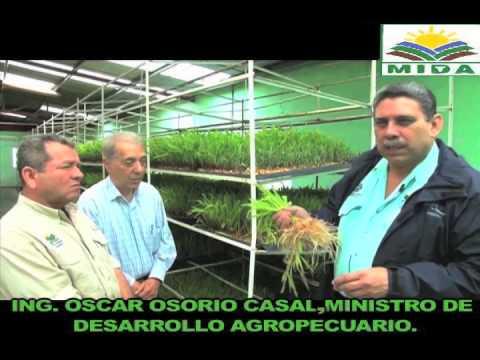 Forraje Verde Hidroponico Panama