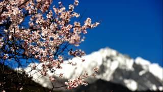 Spring In The Tibetan Grassland