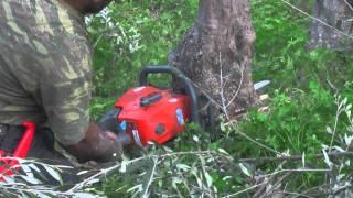 getlinkyoutube.com-Olive Tree Pruning