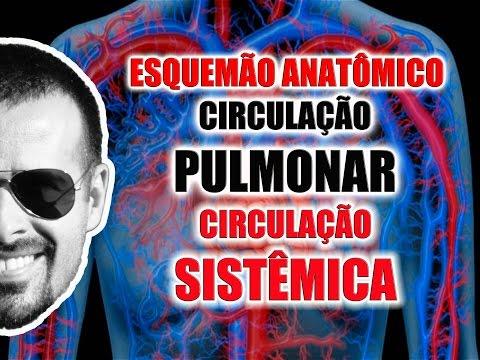 Vídeo Aula 063 - Sistema Circulatório: Circulação pulmonar e sistêmica (esquema anatômico)
