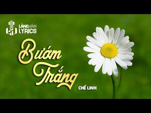 Bướm Trắng - Chế Linh
