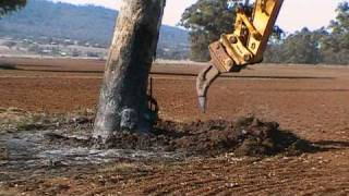getlinkyoutube.com-Excavator Removing Gum Tree