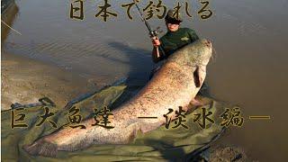 getlinkyoutube.com-日本で釣れる巨大魚達 -淡水編-  巨大魚釣り ターゲット一覧