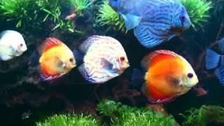 getlinkyoutube.com-Colorful Fish Tank