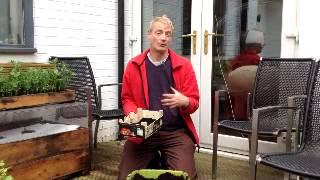 getlinkyoutube.com-How to grow pea shoots