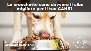 getlinkyoutube.com-Ecco perché le crocchette sono pericolose per il tuo cane