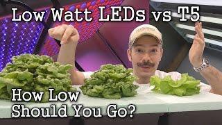 getlinkyoutube.com-Low Watt LEDs vs T5 Grow Lights: Seed Starting / Lettuce Test