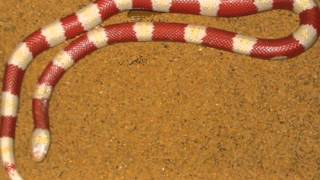 getlinkyoutube.com-10 صور لملوك الثعابين