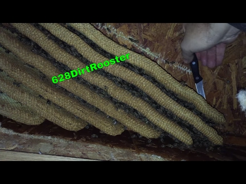 Hive Removal From An Elevated House With YouTube Sensation Jeff Horchoff