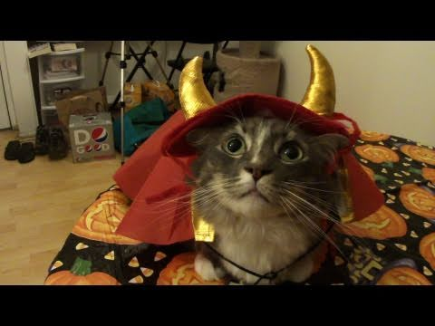 Cats try on Halloween costumes