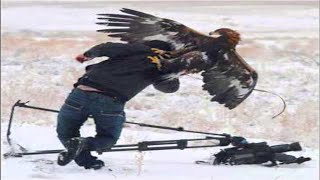 getlinkyoutube.com-Top 7 Best Eagle Attacks (GRIZZLY,KANGAROO...& MAN) HD