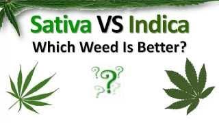 getlinkyoutube.com-Sativa VS Indica: Which Weed Is Better?