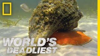 getlinkyoutube.com-Hermit Crab vs. Conch | World's Deadliest