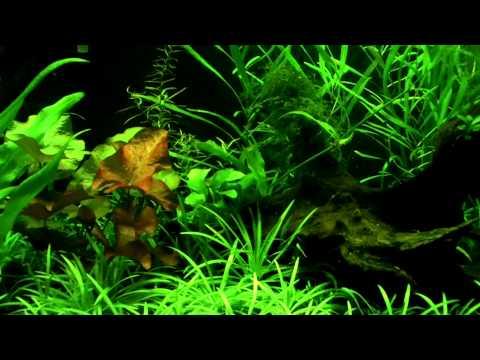 Planted Aquarium low-tech