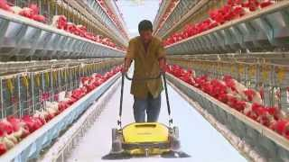 getlinkyoutube.com-Poultry Farming