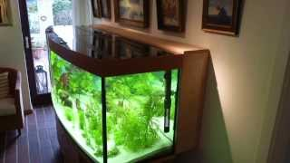 getlinkyoutube.com-Diskus Aquarium Peter Lübbke