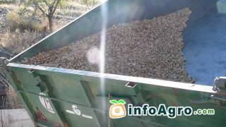 getlinkyoutube.com-Recolección Mecanizada del Almendro