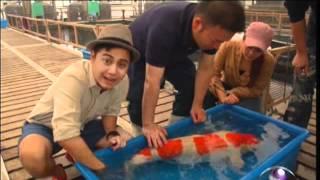getlinkyoutube.com-ปลาคาร์ฟแชมป์โลก8ล้าน