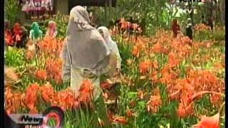 getlinkyoutube.com-Indahnya Kebun Bunga Lily Gunungkidul Jogjakarta1