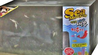 getlinkyoutube.com-바다 새우 키우기, 다이소 씨몽키 애완용 새우를 키우는 Sea Monkeys 씨몽키 장난감 세트 구입 리뷰