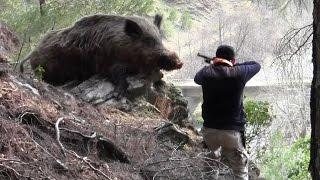 getlinkyoutube.com-Dev Gibi Azılı Domuz Avı Wild Boar Hunting