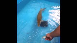 getlinkyoutube.com-การให้อาหารปลาจระเข้