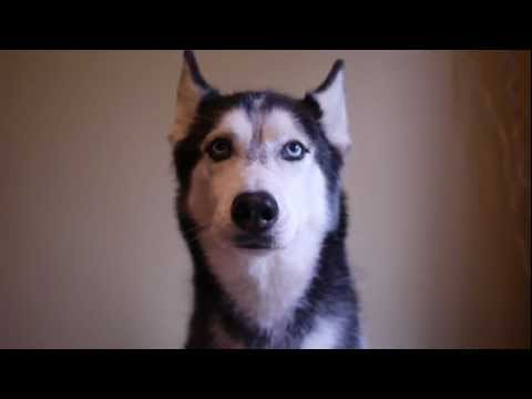 Mishka RULES! - Dogs Talking