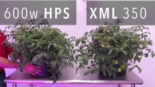 getlinkyoutube.com-XML 350 LED Grow Light vs. 600w HPS Grow Light