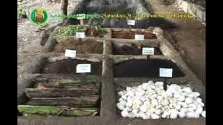 getlinkyoutube.com-Vermiculture & Vermicomposting Part 1