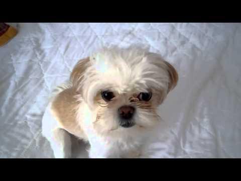 Sonido de Perro Ladrando - Sonidos de Animales