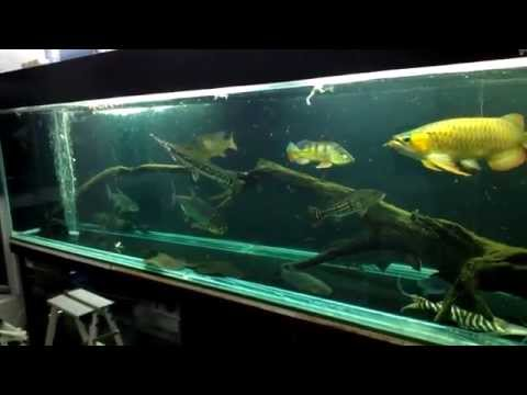 Predators Tank Feeding