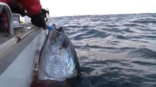 getlinkyoutube.com-GIANT SOUTHERN BLUEFIN TUNA on Stella - YouFishTV Part 2
