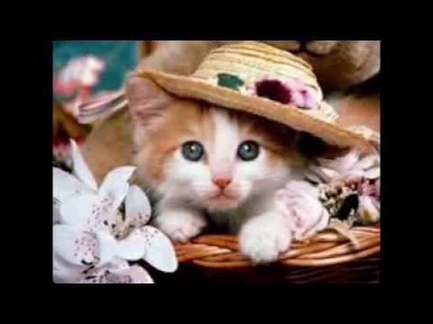 Những hình ảnh về những chú mèo dễ thương