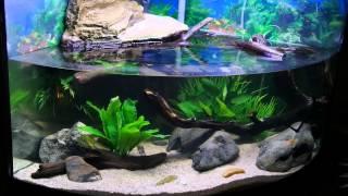 My Turtle Tank Habitat/ Setup Three Years Later! Featuring 2 Northern Black Knobbed Map Turtles!