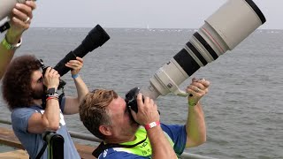 "getlinkyoutube.com-Sigma 150-600 Contemporary ""Real World Review"": The BEST Wildlife / Sports lens for under $1,000?"