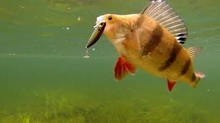 getlinkyoutube.com-Fishing some best lures for perch pike bass muskie. Underwater cam. Рыбалка: ловля окуня на воблер.