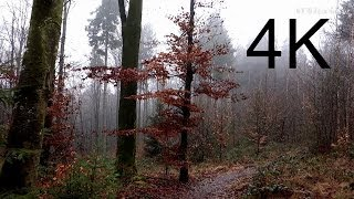 getlinkyoutube.com-4K Video, Ultra HD: DECEMBER FOREST WALK (in the fog)