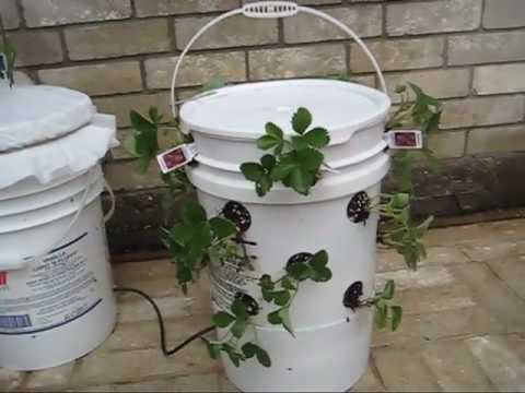 Off-Grid Self-Watering Container Gardening System: The Ultimate Container