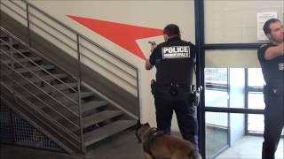 getlinkyoutube.com-Progression avec un chien de Police 3
