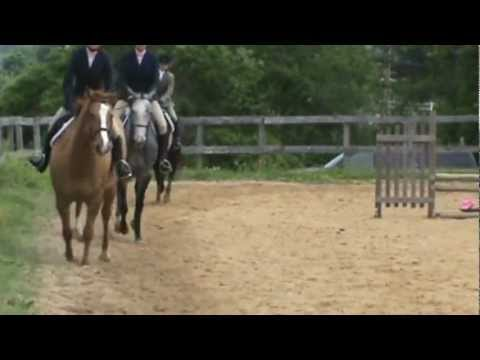 Jiminie Crickets Pleasure Horse Class
