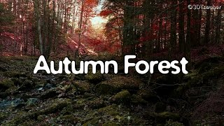 getlinkyoutube.com-AUTUMN FOREST Sounds 1 Hour Video, Nature Relaxation @ Waterfall