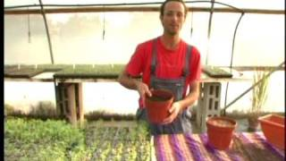 getlinkyoutube.com-מתן הגנן: גידול ירקות בעציצים - השקיה והזנת הצמח