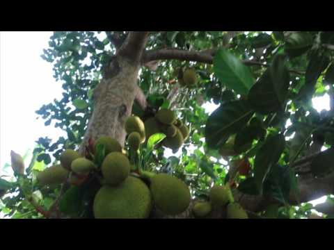 Supercharged Jackfruit and a Quick Update