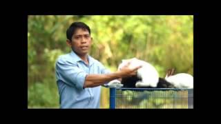 getlinkyoutube.com-Video Penyuluhan Ternak Kelinci Universitas Mulawarman 2014