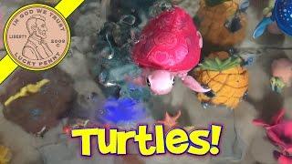 getlinkyoutube.com-Little Live Pets Lil' Turtle, Walks & Swims!