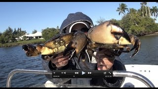 getlinkyoutube.com-Catching, Cooking and Eating: Blue Crabs and Stone Crabs same time!