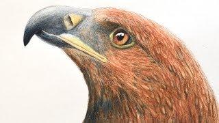 getlinkyoutube.com-Cómo dibujar una cabeza de águila con lápices de colores acuareleables - Arte Divierte