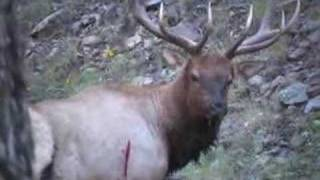 getlinkyoutube.com-NEW MEXICO BULL ELK BOW HUNT