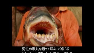 getlinkyoutube.com-金玉破壊する恐怖の魚 ボールカッター